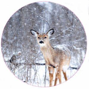 bambi-1-30cm.jpg