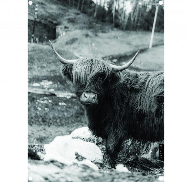 highlander-lag-res.jpg