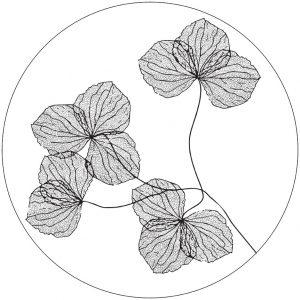 lag-gedroogde-bloemen-30cm.jpg