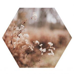 lag-res-Dry-Leaves-hexagon-1.jpg