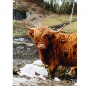 lr-highlander-bruin-tuinposter-copy.jpg