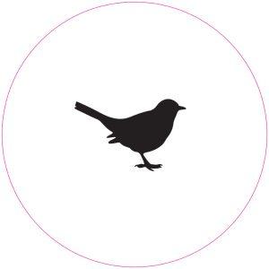 vogel-wit.jpg