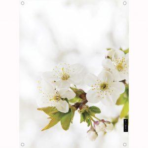 blossom-tuinposter1.jpg
