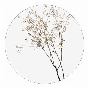 dry-plants-30cm.jpg