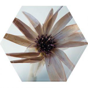 witte-bloem-hexagon.jpg