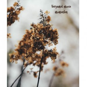 lr-tuinposter-miniflower-.jpg